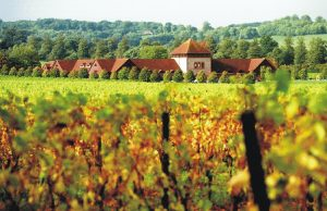 denbies-vineyard